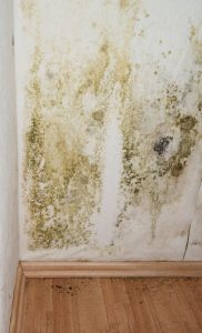 prevence proti plísním na severních stranách stěn