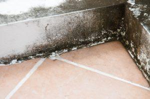jak zlikvidovat plíseň v koupelně