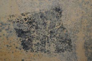 odstranění plísně a dezinfekce zdi Plzeň