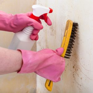 Plísně na stěnách zlikvidujte rychle a trvale, jsou zdraví nebezpečné